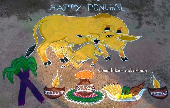 Cow with pongal Pot